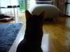 Cat402