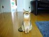 Cat405