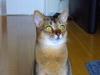 Cat406